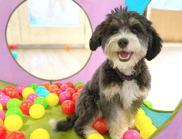 Smiling dog playing with plastic balls