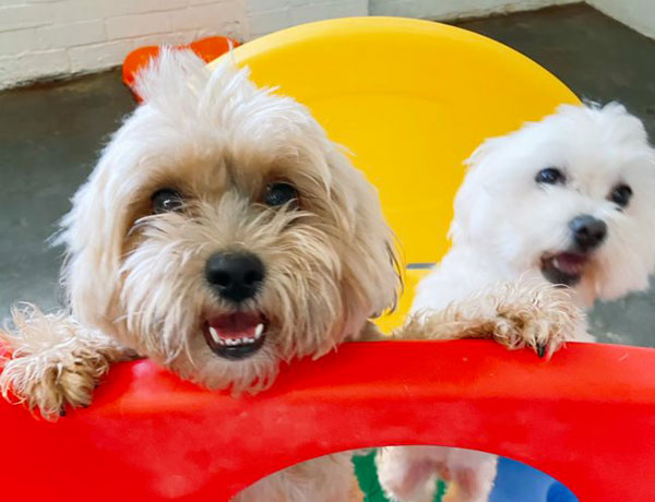 Two dogs on playground equipment